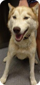 Husky Mix Dog for adoption in Richmond, Virginia - Diesel