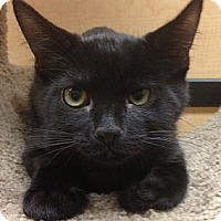 Adopt A Pet :: Frankie - Monroe, GA