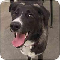 Adopt A Pet :: Charlotte - Phoenix, AZ