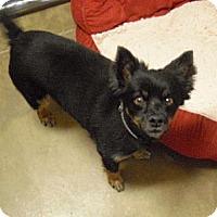 Adopt A Pet :: Zek - Wickenburg, AZ