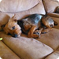 Adopt A Pet :: Princess - Goodyear, AZ