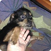 Adopt A Pet :: Baby Bubs - Holmes Beach, FL