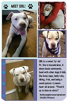Pit Bull Terrier Mix Dog for adoption in Los Angeles, California - Girl