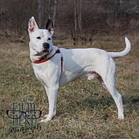 Adopt A Pet :: Balto - Centerburg, OH