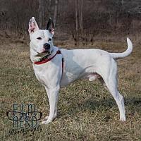 Adopt A Pet :: Balto - Centerburg, OH