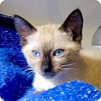 Adopt A Pet :: Margaret - Davis, CA