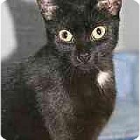 Adopt A Pet :: Samaria - Marietta, GA