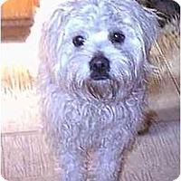 Adopt A Pet :: Nicholas - dewey, AZ