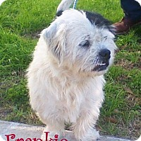 Adopt A Pet :: Bricktown NJ - Frankie - New Jersey, NJ