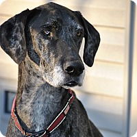 Adopt A Pet :: Millie - Springfield, IL