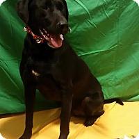 Adopt A Pet :: George - Foster Needed - Detroit, MI