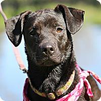 Adopt A Pet :: Sadie Belle - Pipersville, PA