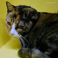 Adopt A Pet :: Eilis - Tucson, AZ