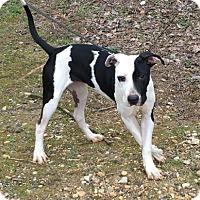 Adopt A Pet :: Keely - Voorhees, NJ