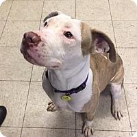 Adopt A Pet :: Natasha - Cleveland, OH