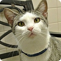 Adopt A Pet :: Friday - white settlment, TX