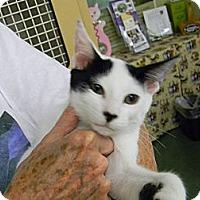 Adopt A Pet :: Franklin - Naples, FL