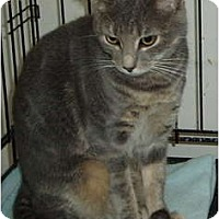 Adopt A Pet :: Unnamed - Westfield, MA