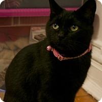 Adopt A Pet :: Tsuki - Chicago, IL