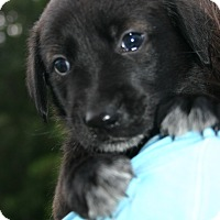 Adopt A Pet :: July - Knoxvillle, TN
