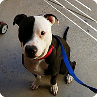 Adopt A Pet :: Nemo - Tucson, AZ