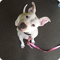 Adopt A Pet :: Bella - Long Beach, CA