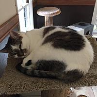 Adopt A Pet :: Henrietta - Algonquin, IL