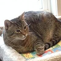 Adopt A Pet :: Sweetie (2) - Ashland, MA