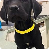 Adopt A Pet :: Jem - Hockessin, DE