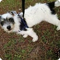 Adopt A Pet :: Lita - Marlton, NJ