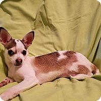 Adopt A Pet :: Carolina - Hagerstown, MD