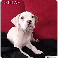 Adopt A Pet :: Delilah - DeForest, WI