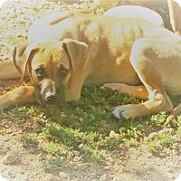 Adopt A Pet :: Ruthie - Salem, NH
