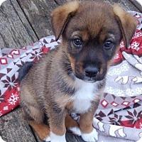 Adopt A Pet :: Gabriel - Patterson, NY