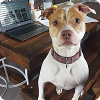 Adopt A Pet :: Kai- ADOPTION PENDING - Warrenville, IL