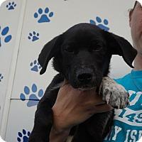 Adopt A Pet :: Rosco - Oviedo, FL