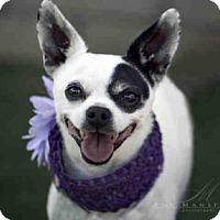 Adopt A Pet :: Louise - Vista, CA