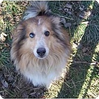 Adopt A Pet :: Lindsey - Antioch, IL