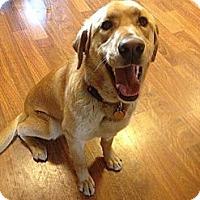 Adopt A Pet :: Buddy II - Alliance, NE