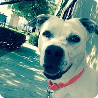 Adopt A Pet :: Party - Mission Viejo, CA