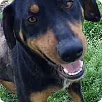 Adopt A Pet :: Vegas - Somers, CT