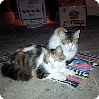 Adopt A Pet :: Finners - Leamington, ON