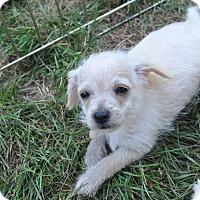 Adopt A Pet :: Bugs - Tumwater, WA