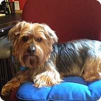 Adopt A Pet :: Russell - Adoption Pending - Gig Harbor, WA
