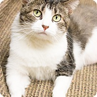 Adopt A Pet :: Hadley - Chicago, IL