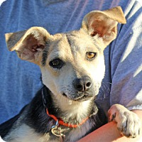 Adopt A Pet :: Lacey - in Maine - kennebunkport, ME