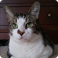 Adopt A Pet :: Sam - Cambridge, ON