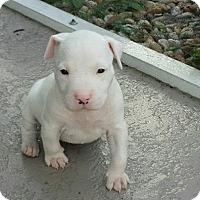 Adopt A Pet :: Lily - Windermere, FL