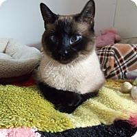Adopt A Pet :: Chico - Medford, WI