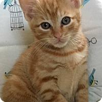 Adopt A Pet :: Benji - oakland park, FL